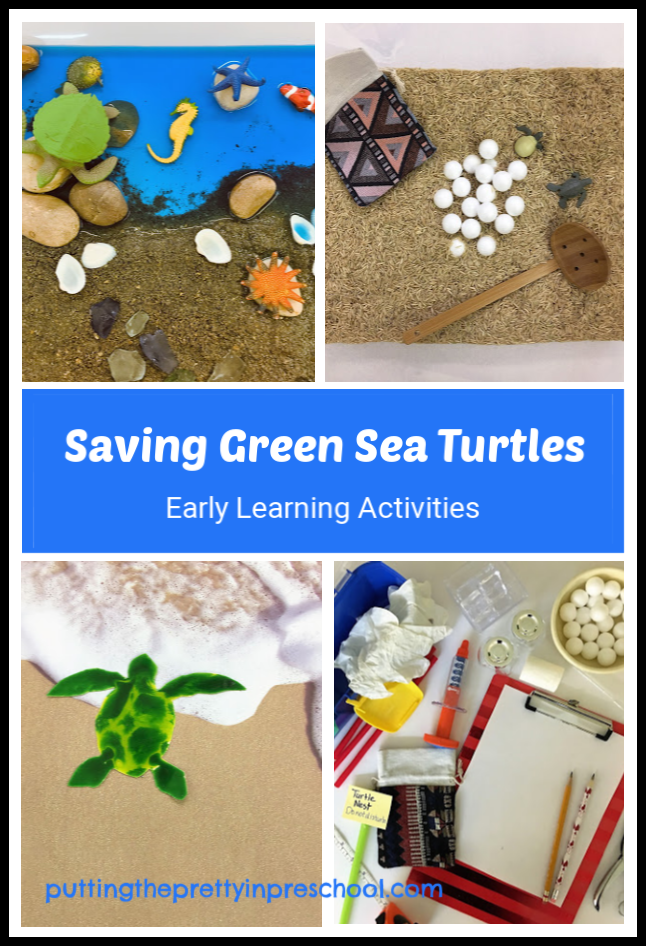 Green sea turtle activities for early learners. Sensory bin, small world, art and dramatic play for preschool and kindergarten children.