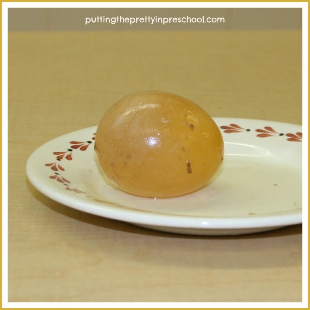 An unboiled egg after being immersed in cider vinegar for two weeks.