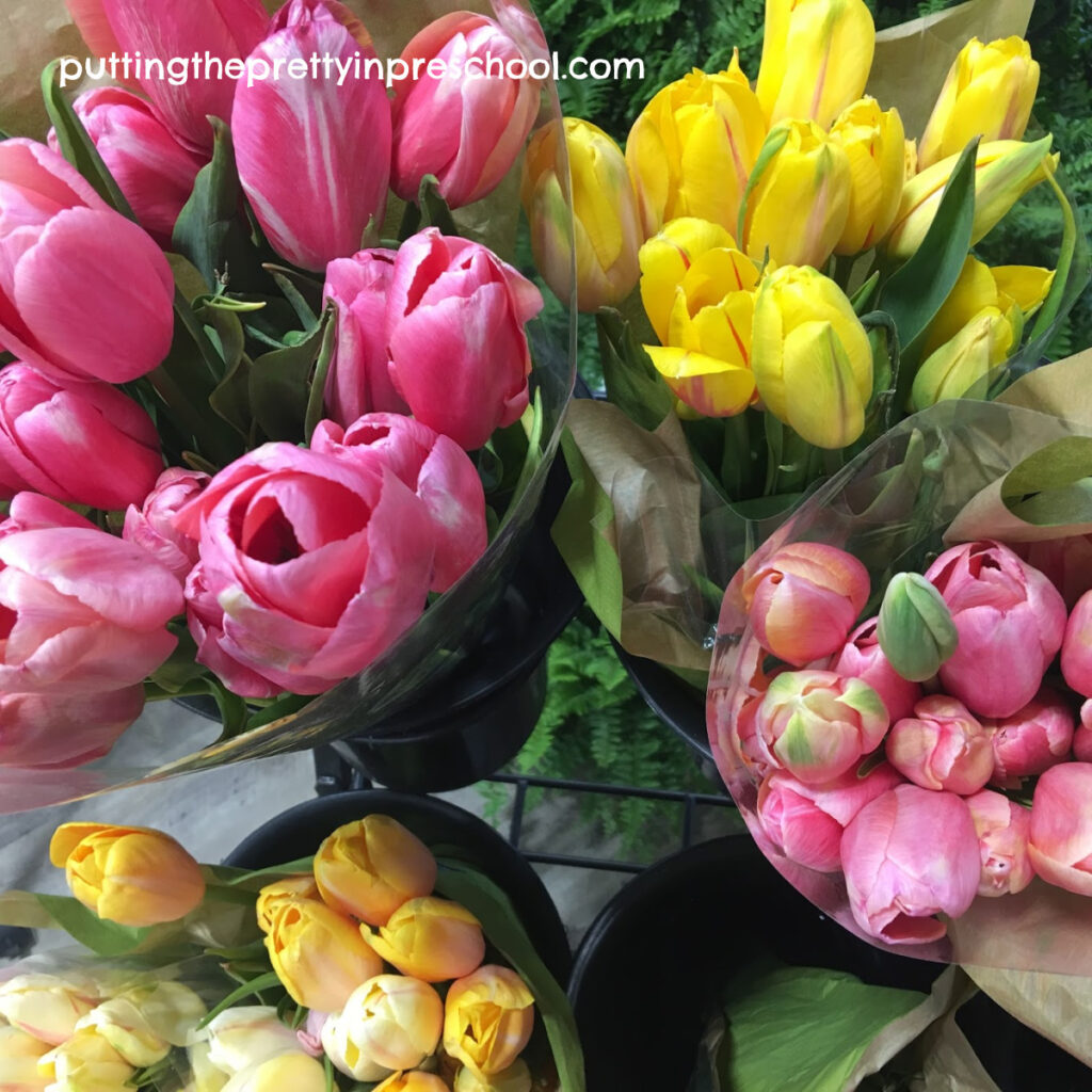 Yellow and pink tulips.