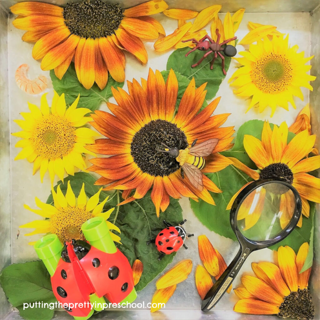 Sensory tray with sunflower heads and leaves, insects, binoculars and a magnifying glass.
