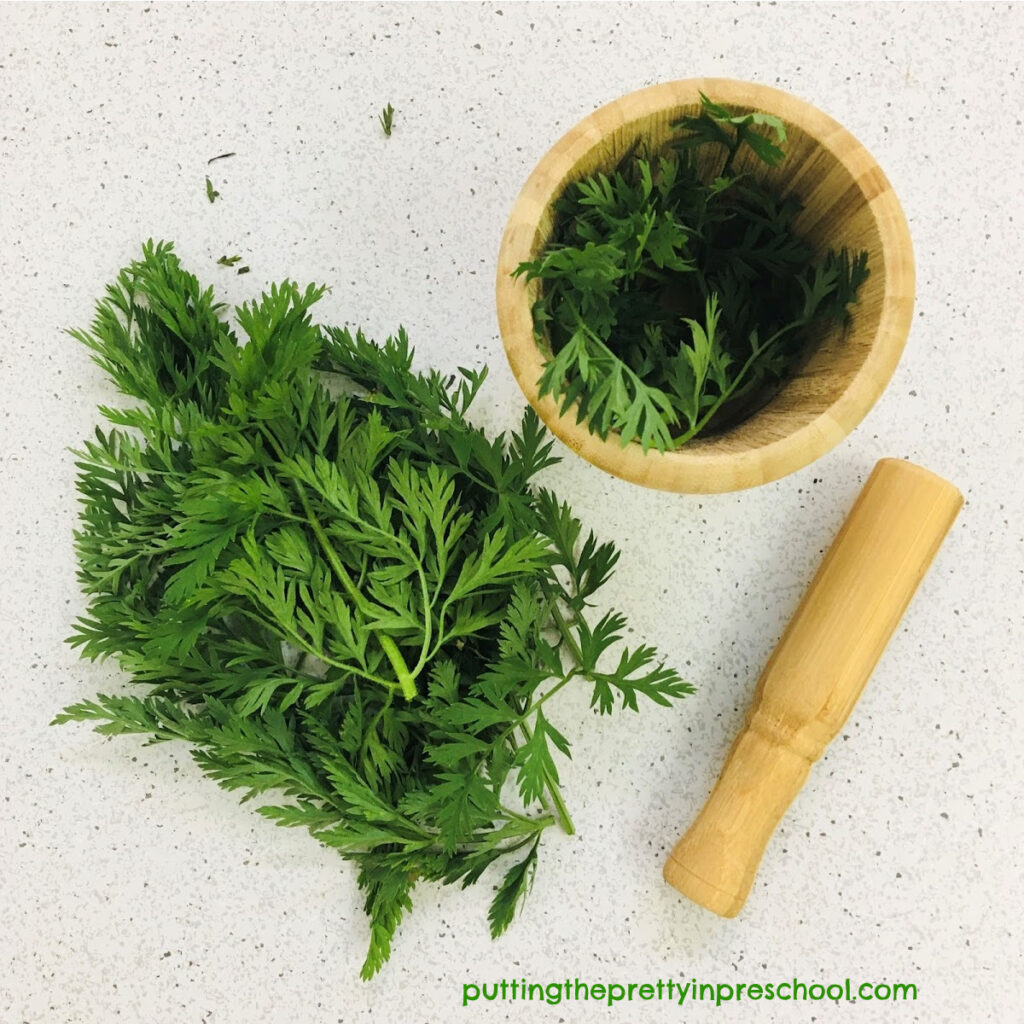 Carrot tops with mortar and pestle for early learners to explore.