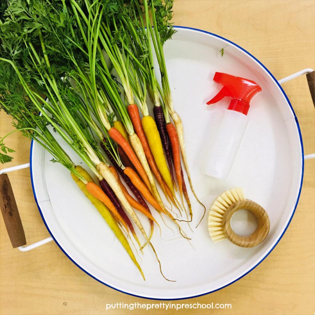 Rainbow carrot sensory tub to simulate a carrot washing station.