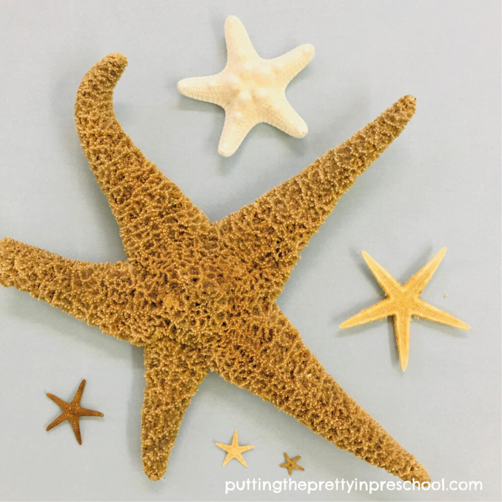 Sea stars in various sizes.