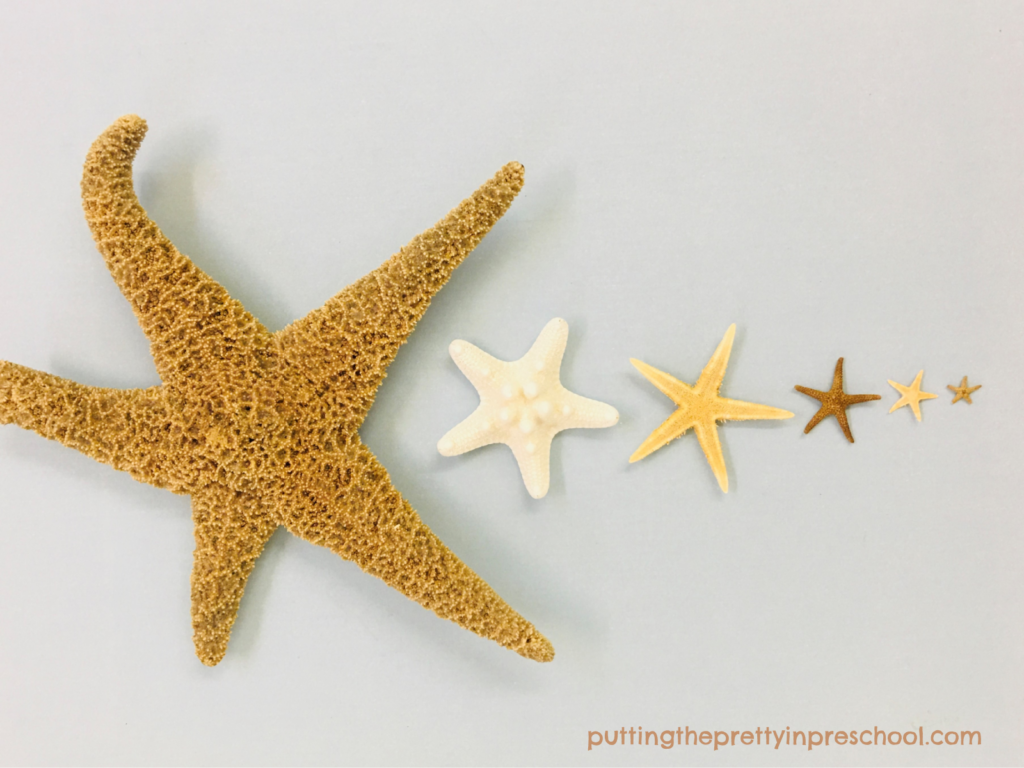 Invitation to order sea stars from largest to smallest.
