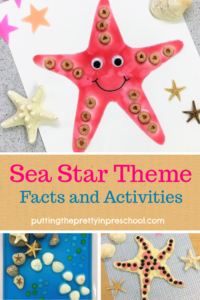 Sea star theme activities for early learners. Art, sensory, and math activities featured. Sea star facts and links to resources included.