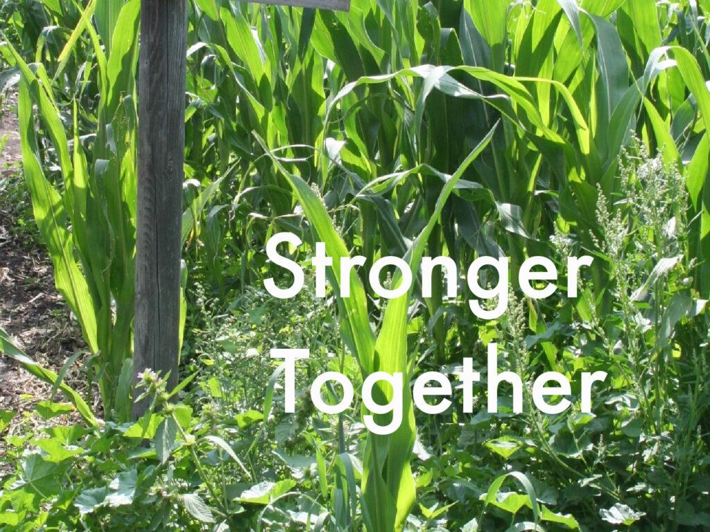 The theme for the 2020 Edmonton Corn Maze.