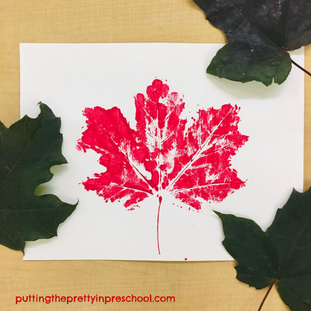 Maple leaf paint print with red tempera paint.