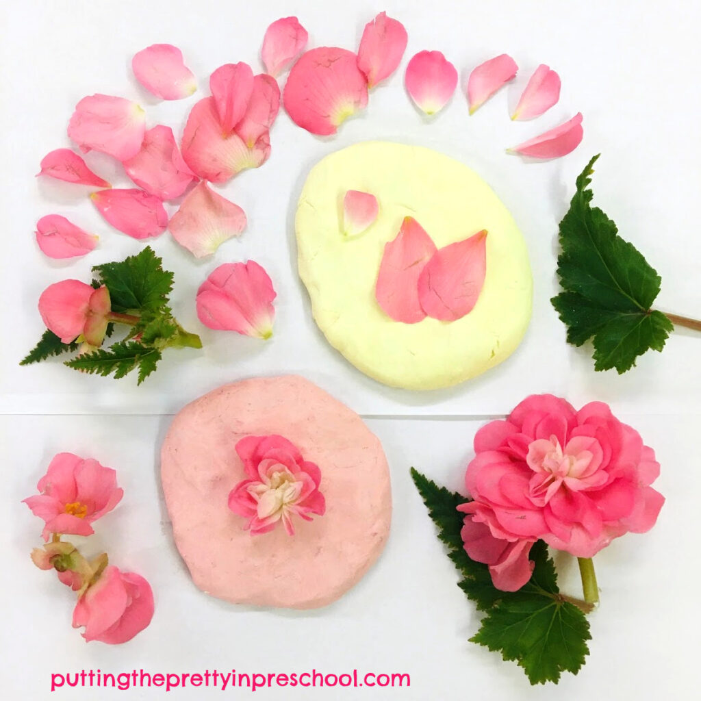 Coconut and strawberry playdough with nonstop pink begonia leaves and flower petals.