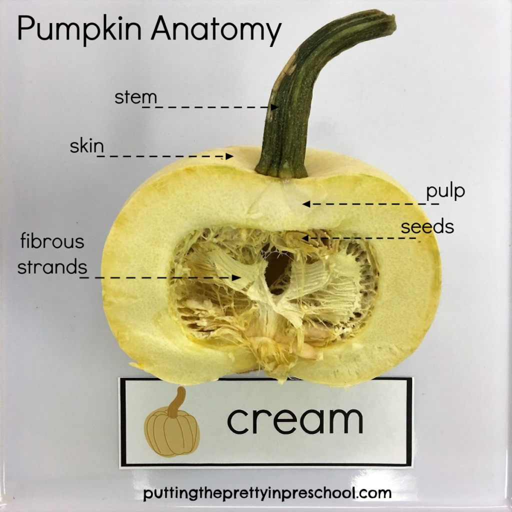 Pumpkin anatomy diagram showing the stem, skin, pulp, seeds, and fibrous strands.