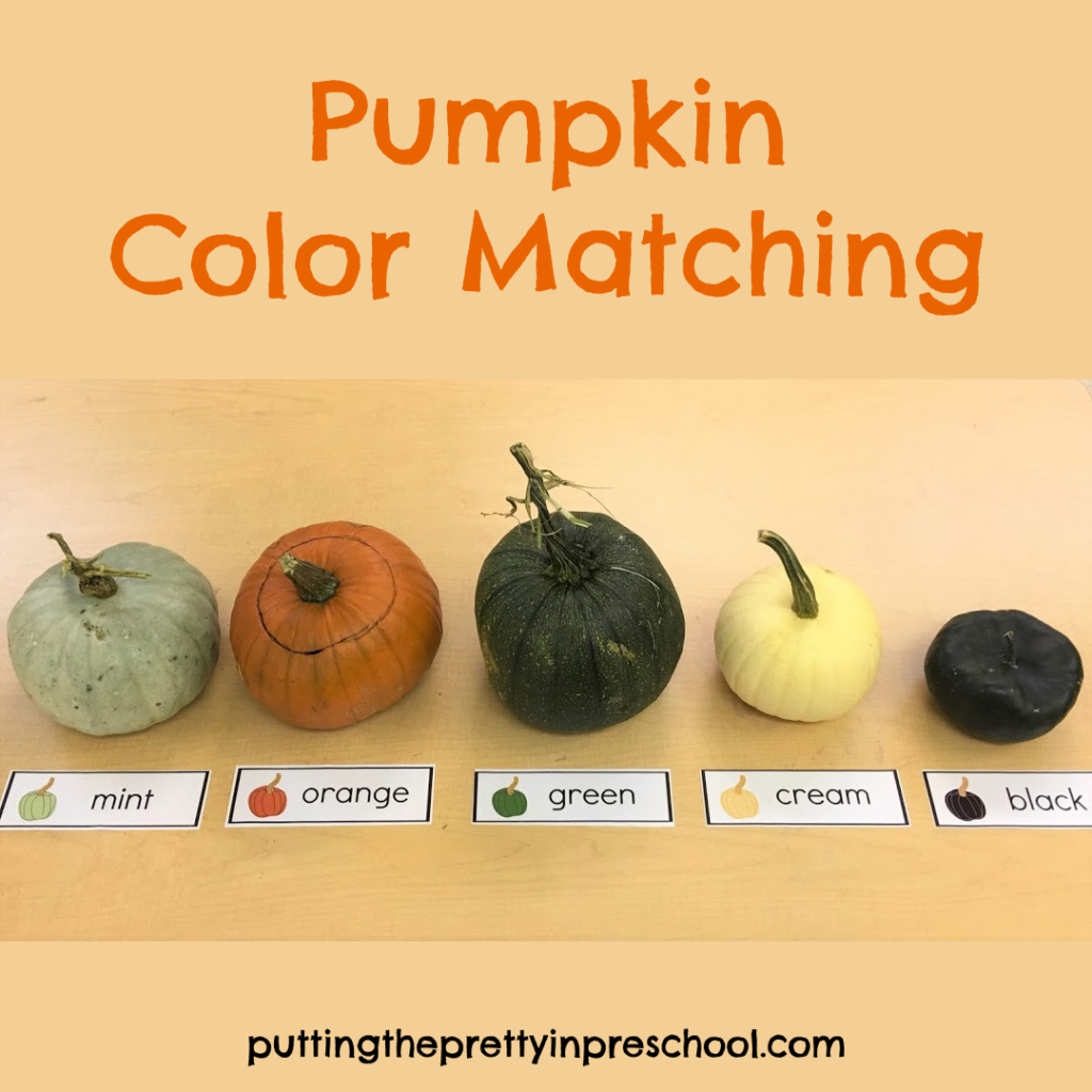Color matching with mint, orange, green, cream, and black pumpkins.