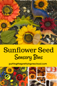 Three sunflower seed sensory bins. Dinosaurs, sunflowers, pumpkins, sand toys, and loose parts are highlights of the bins.