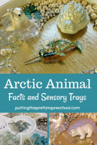 Arctic animal sensory trays featuring seals, narwhals, a polar bear, and igloo. Luxurious loose parts accent the trays.